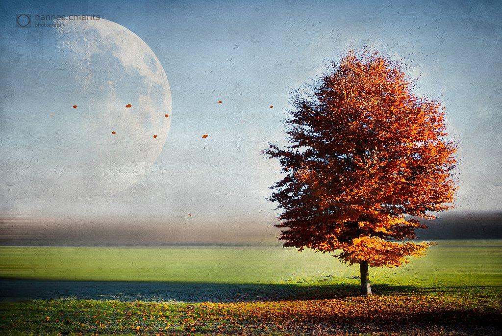 2011-11-18-10-15-38DSC-0891-Bearbeitet-moon.jpg
